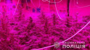 Житель Запорізької області створив у себе в будинку плантацію марихуани, – ФОТО
