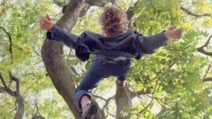 У Запорізькій області 11-річний хлопчик впав з дерева і отримав чимало травм