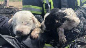 В Запорожье пожарные спасли из огня пятерых щенков, – ФОТО