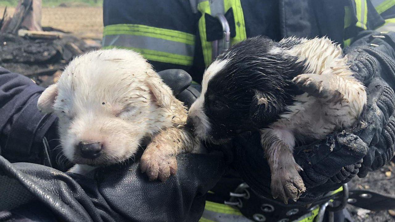 У Запоріжжі пожежники врятували з вогню п'ятьох цуценят, – ФОТО
