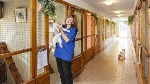В Запоріжжі пропонують створити готель для тварин