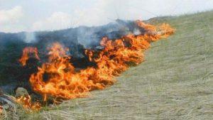 В Запорізькій області за добу згоріло більше 8 га екосистем