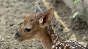В мелитопольском зоопарке родился