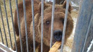 На державному аукціоні безкоштовно віддають левів та ведмедів, які знаходяться в Запорізькій області