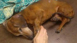 У Запоріжжі п'яний чоловік викинув з вікна власну собаку, – ФОТО