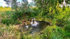 Возле села в Мелитопольском районе нашли уникальный источник, — ФОТО