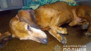 У Запоріжжі поліція зайнялася живодером, який викинув з вікна власну собаку, – ФОТО