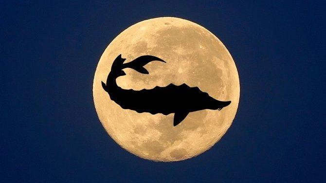 В небі над Азовським морем зійшов Осетровий місяць, — ФОТО