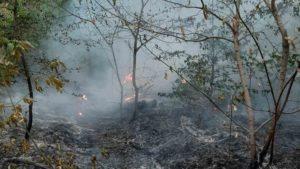 На Хортице произошел пожар: горело более полукилометра заповедника