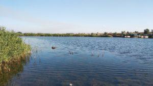 На Запоріжжі в ставку потонув чоловік, — ФОТО