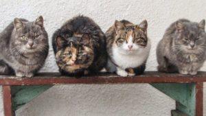 В Запорожье построили кошачий домик, — ФОТОФАКТ