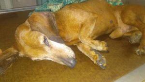 У Запоріжжі судитимуть шкуродера, який викинув з вікна власну собаку, – ФОТО