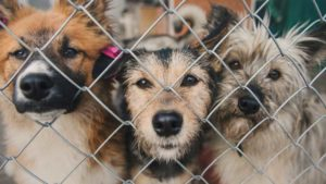 Дождались: в Запорожье построят приют для животных