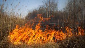 На территории Запорожской области за сутки сгорело почти четыре гектара леса