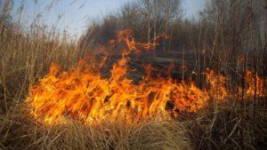 В Запорожье и области предупреждают о чрезвычайной пожарной опасности