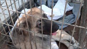На запорожском курорте пенсионер сбросил своего щенка с моста: у собаки сломаны все лапы, – ФОТО