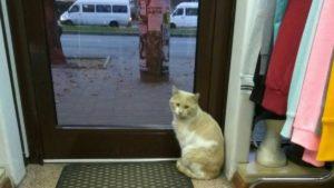 В центрі Запоріжжя шкуродер нацькував зграю собак на кота: шукають свідків