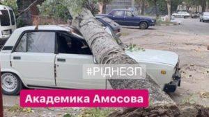 В центре Запорожья на автомобиль рухнул огромный тополь, – ФОТО, ВИДЕО