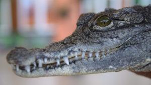 «Крокодиловая ферма»: в Запорожье на выставке показали самых древних и опасных хищников на планете, – ФОТОРЕПОРТАЖ