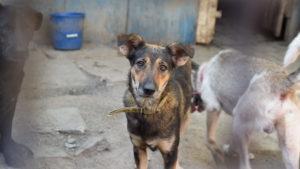 Как живут собаки в запорожском приюте для бездомных животных, – ФОТОРЕПОРТАЖ
