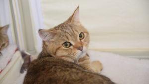 Сфинксы, мэйн-куны и британцы: в Запорожье состоялась международная выставка кошек, – ФОТОРЕПОРТАЖ