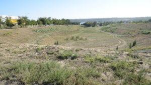 Амброзия, высохшие деревья и размытая балка: как сегодня выглядит недостроенный парк на «Радуге», – ФОТОРЕПОРТАЖ