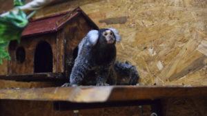 Карликовые обезьянки, мусанг и кенгуру: как в Запорожье проходит выставка обезьян и других животных, – ФОТОРЕПОРТАЖ