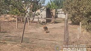 В Запорожской области нарушитель спустил на полицейских дворового пса, – ФОТО