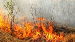 На території Запорізької області за минулий тиждень сталося майже 200 пожеж в екосистемах