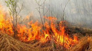 Жителей Запорожской области предупреждают о чрезвычайной пожарной опасности