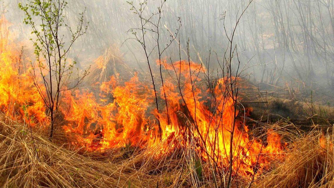 Жителів Запорізької області попереджають про надзвичайну пожежну небезпеку