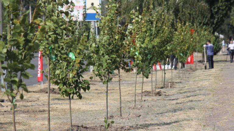 В Запорожье на Набережной состоялась масштабная экологическая акция: жители города высадили несколько сотен деревьев, – ФОТОРЕПОРТАЖ