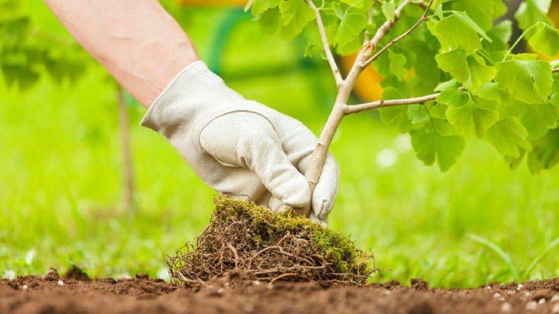 В Запорожье на Набережной высадят две сотни молодых деревьев