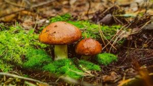 Під Запоріжжям селянин отруївся грибами