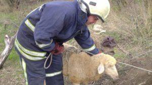 На Запорожье в заброшенный колодец упала овца