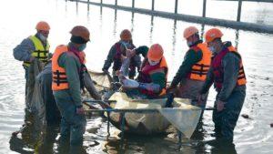 У води Запорізької області випустили корисну рибу