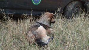 Собаку, який п'ять місяців просидів в колодязі на території покинутого