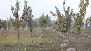 «Миллион деревьев за сутки»: в Запорожье на берегу Днепра провели масштабную высадку деревьев, – ФОТОРЕПОРТАЖ