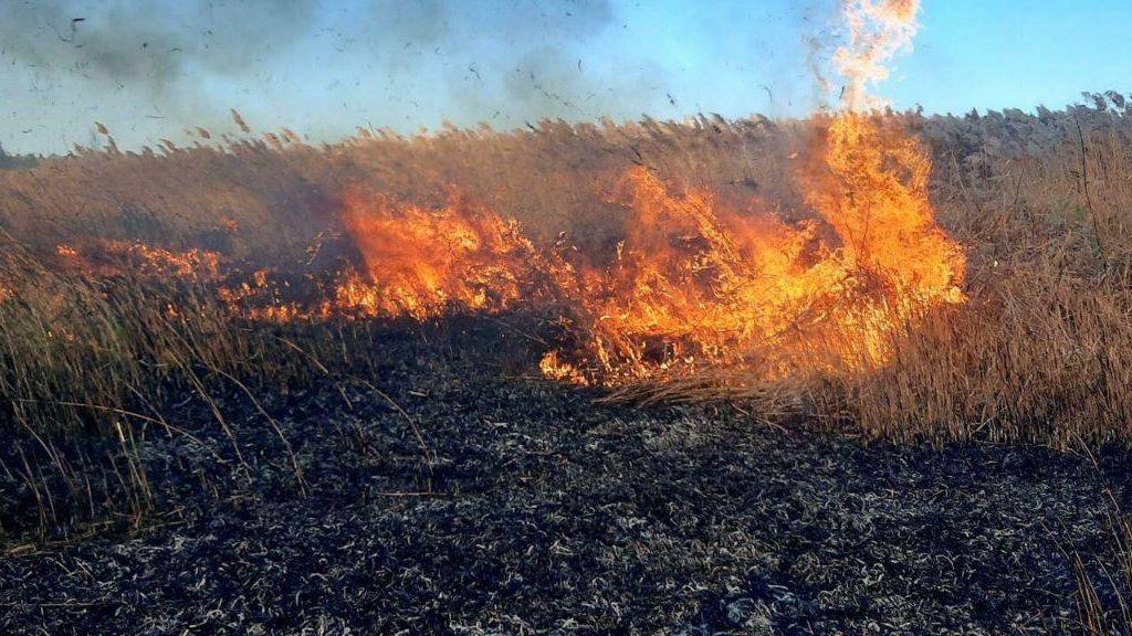 Между двумя ОТГ в Запорожской области горел камыш