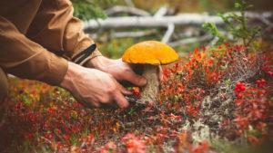 На Запоріжжі людину госпіталізували після отруєння грибами