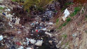 В Запорожье из-за мусора в реке гибнут птицы, — ВИДЕО