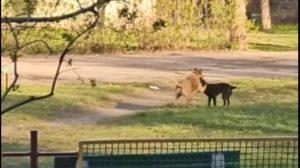В центре Запорожья отравили собак