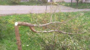 В Запорожье в сквере Яланского срубили 70 молодых деревьев, – ФОТО