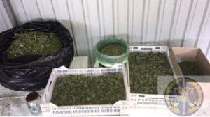 В Запорожье у наркоделка нашли 2,5 килограмма наркотиков, – ФОТО