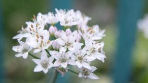 В Запорожском ботаническом саду посреди осени цветут летние растения, – ФОТОРЕПОРТАЖ