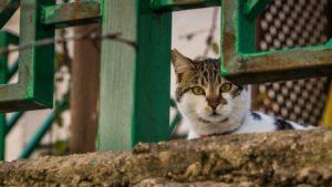 Енергодарські коти можуть стати частиною екосистеми міста