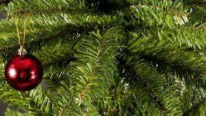 За сколько в Запорожской области в этом году можно будет купить новогоднюю елку, — ЦЕНЫ