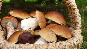 Двоє мешканців Запорізької області отруїлися грибами