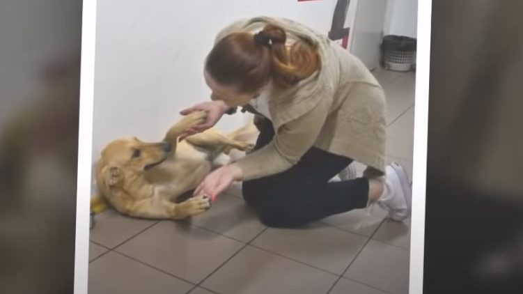Собака-безхатченко родом з Запорізької області стала зіркою Vogue, — ВІДЕО