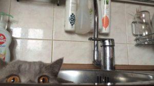 На этой неделе жители Шевченковского района останутся без воды